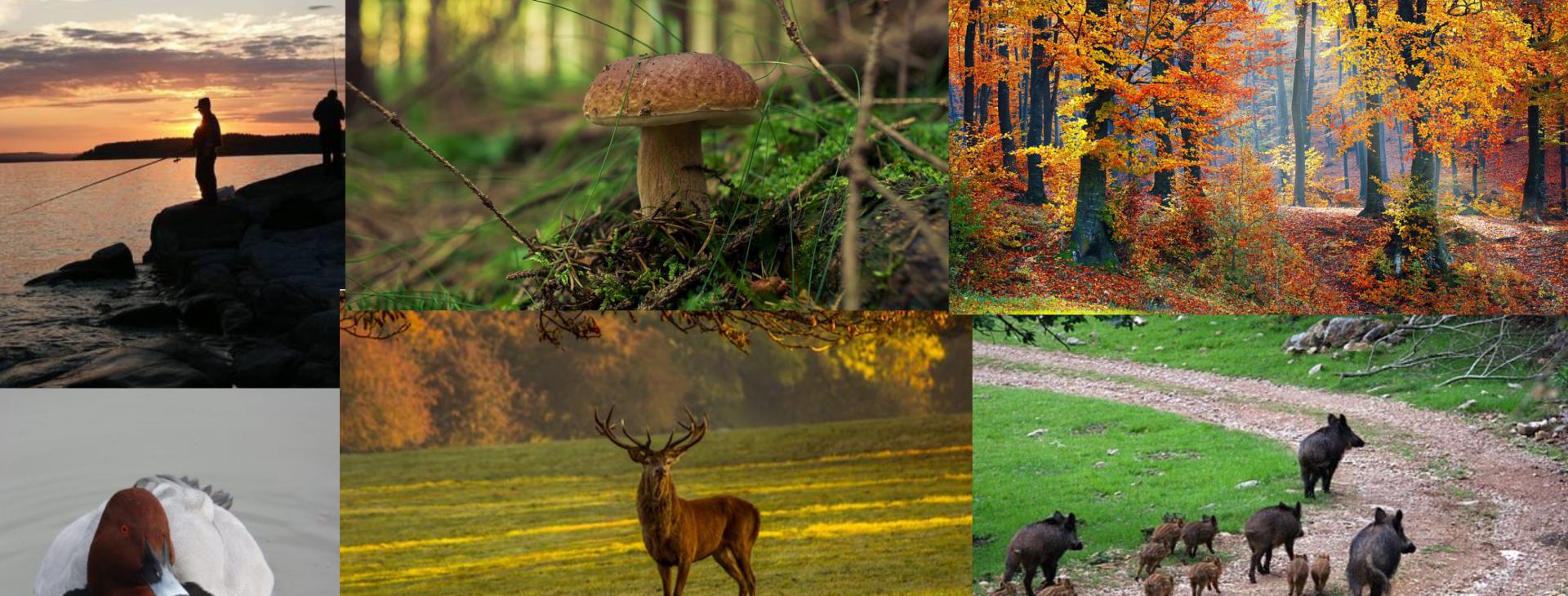 L'environnement, la forêt, la faune sauvage...vous passionnent ? Notre Bac Pro est fait pour vous !!     Découvrir