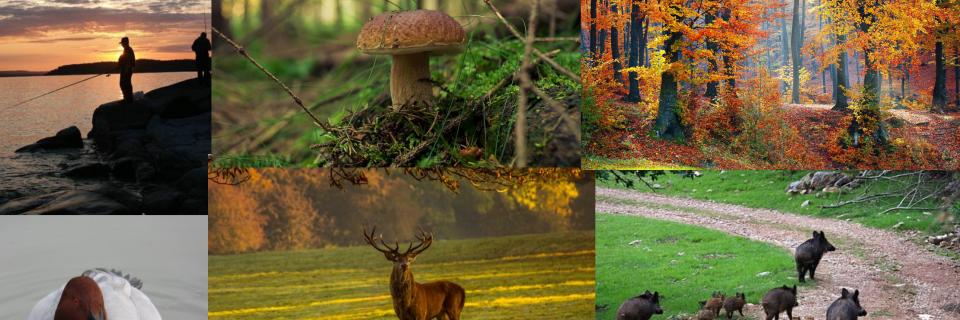 La nature, la chasse, la pêche...vous passionnent ? Notre Bac Pro est fait pour vous !!     Découvrir