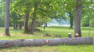 Gestion de la faune sauvage Forestière