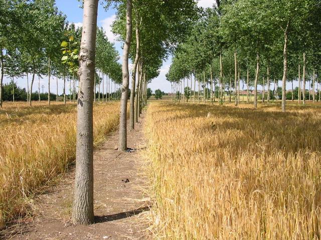 Agroforesterie un avenir très proche